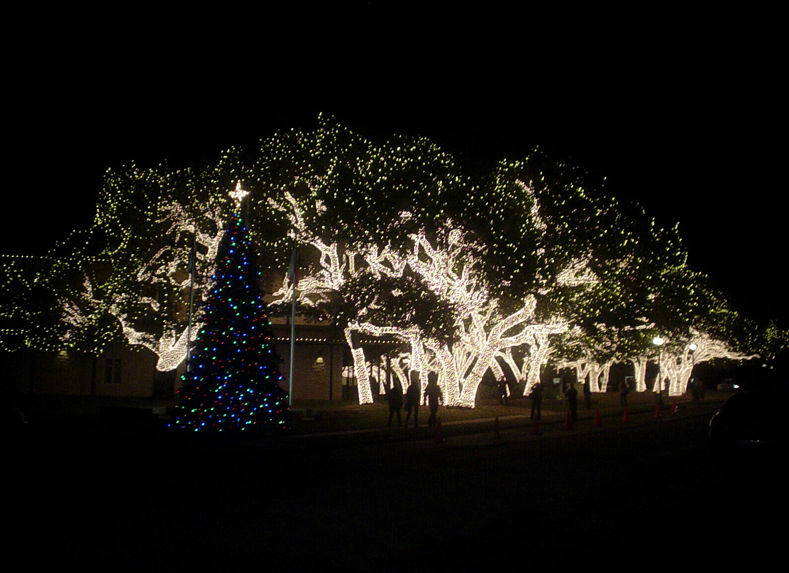 one of the first spectacular displays of christmas lights youll see in johnson city is this lighted grove of trees on the pedernales electric companys