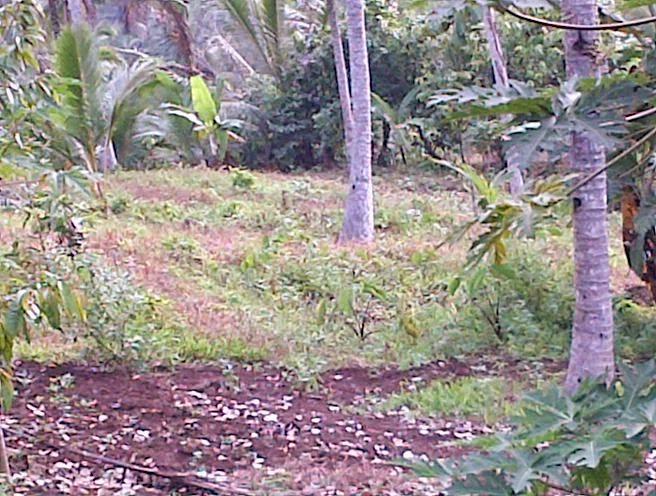 Dijual tanah kebun tegalan di desa Wanagiri Tabanan