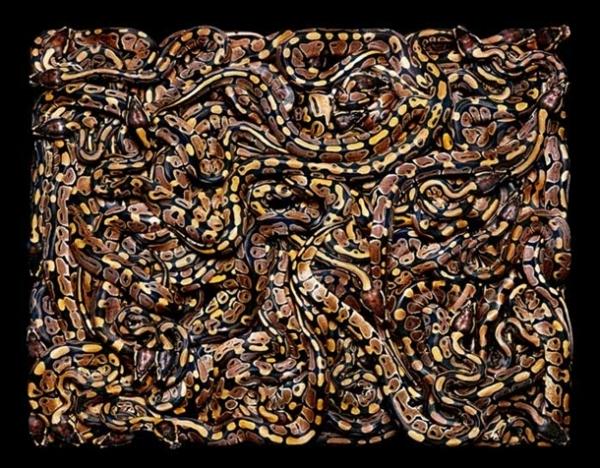 http://3.bp.blogspot.com/-XjM2v99SKtA/TpbPxqY5wjI/AAAAAAAADBE/AaeQZvLrh1c/s1600/256712%252Cxcitefun-fascinating-snakes-11.jpg