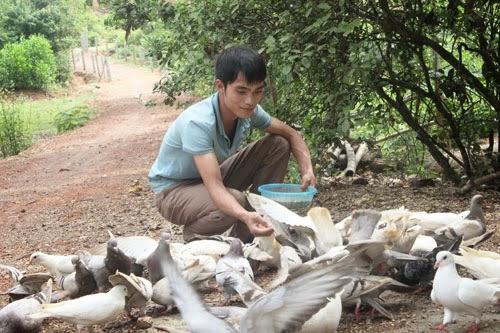 Trở thành triệu phú nhờ nuôi gà và chim bồ câu