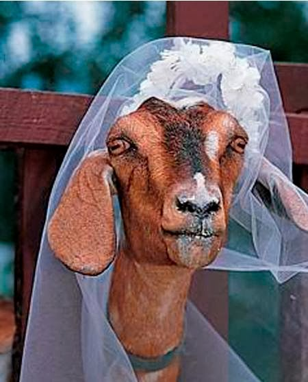 12 Orang Menikah dengan Hewan Sepanjang Masa