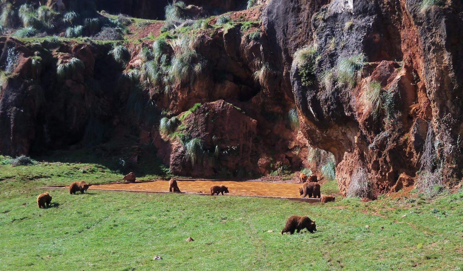 Zoo de Cantabria: animales en Cabarceno