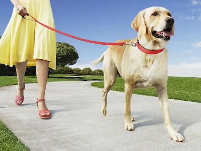 Quitale manía ladrar tu perro al pasear