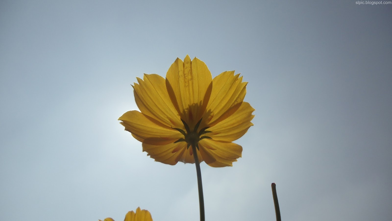 http://3.bp.blogspot.com/-XkkOeXQnCHo/UBIn7oVXbDI/AAAAAAAAKlY/fLL3ZvtMO50/s1600/Srilanka+Various+Flowers+And+Nature++(8).JPG