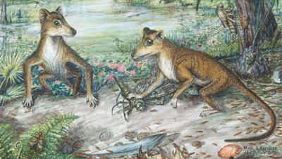 mamiferos de hace 130millones de años Zhangheotherium