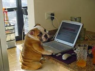 smešna slika: Pas sa laptopom