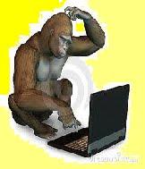 Conversando y Chatean-do entre Gorilas