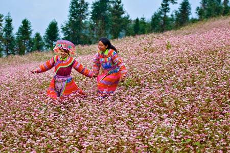 Ảnh Hà Giang vào mùa hoa tam giác mạch