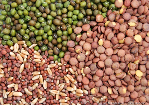 http://3.bp.blogspot.com/-Xl5QsJshYu0/TcvSCK2LrDI/AAAAAAAAAOw/v8ncK7Sx4GI/s1600/vegetable-seeds2.jpg