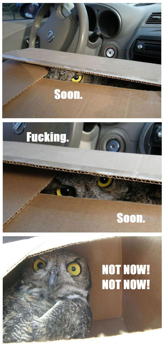 Funny Owl In Box Soon - Not Now