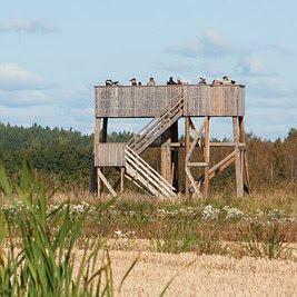 Saltfjärdenin torni, Kirkkonummi Kuva: Henrik Kettunen
