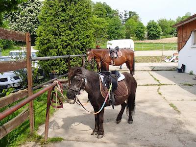 Przedszkole, impreza, koń, konie, jazda konna