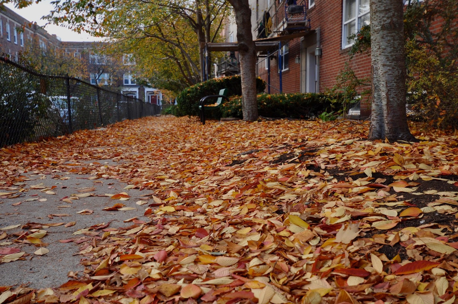 random osity fall has fallen rh goodrandomfun blogspot com  kerstmarkt fall has fallen