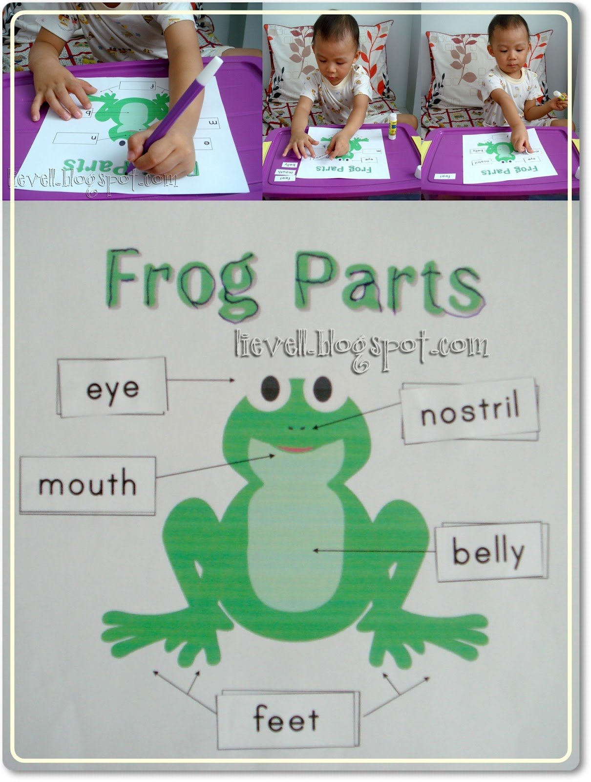 external and internal parts of the frog d youtube