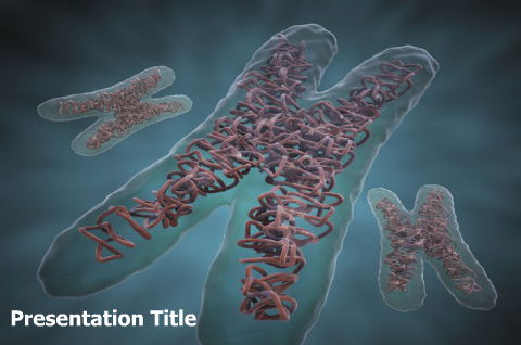Medical powerpointppt templates download chromosome powerpoint but during cell division the dna that makes up chromosomes becomes more tightly packed and thus is visible under a microscope studies have been done to toneelgroepblik Image collections