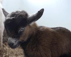 Animal Spotlight: LONNIE