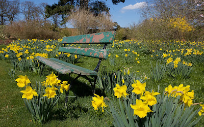 Daffodils Flower Garden Wallpapers