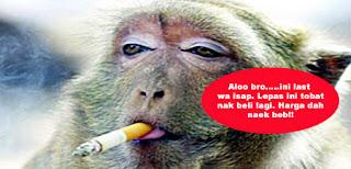 Harga Rokok Naik RM16 Sekotak