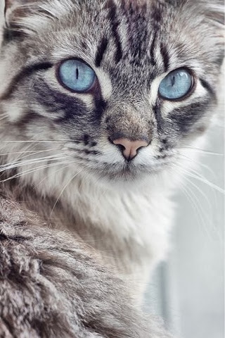 5 Amazing kittens with blue eyes