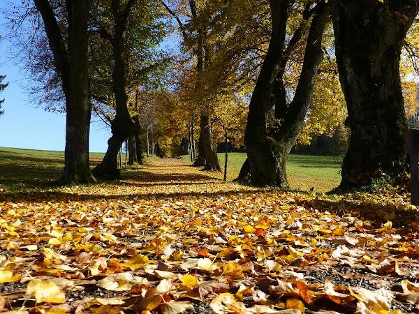 The Autumn Tag