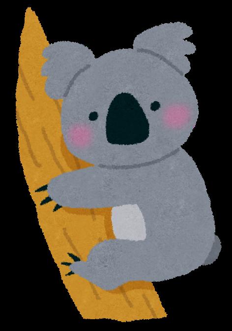 コアラの画像 p1_34