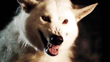 direwolf.jpg