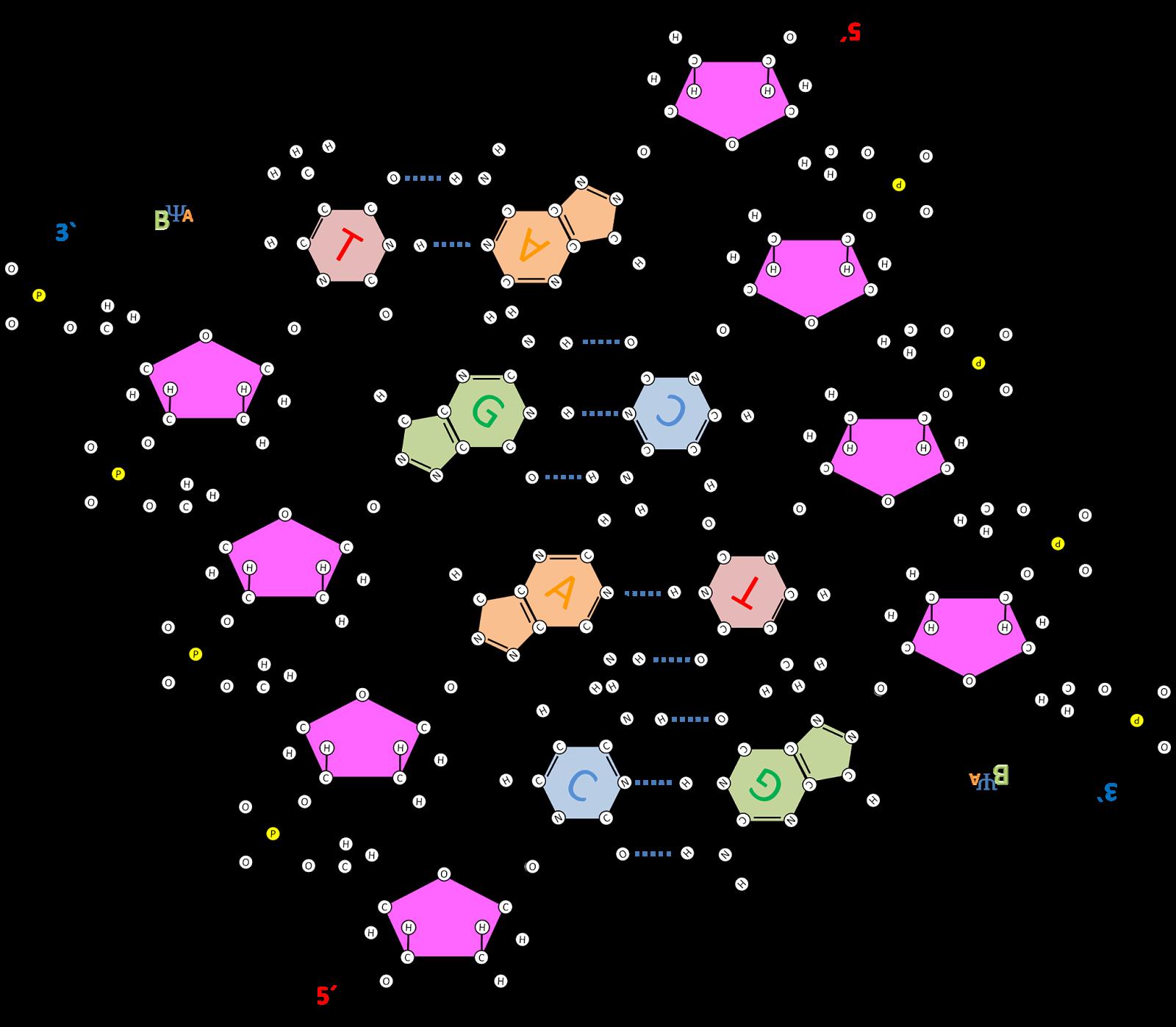 ADN - Modelo de Watson y Crick - YouTube - HD Wallpapers