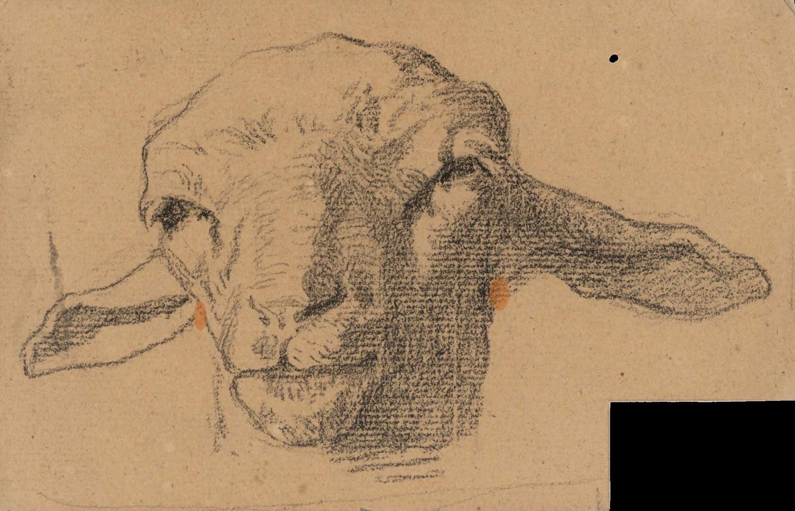 Line Drawing Of Sheep Face : Cow and calf drawing at getdrawings free for personal use