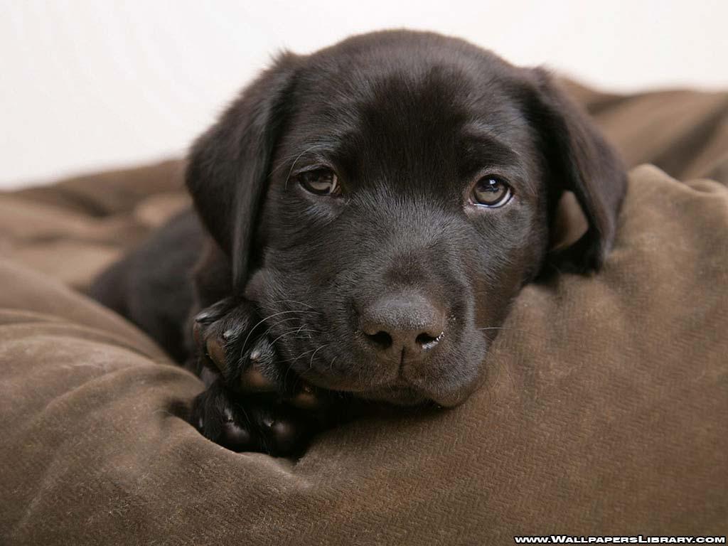 Cute Baby Dog Wallpaper