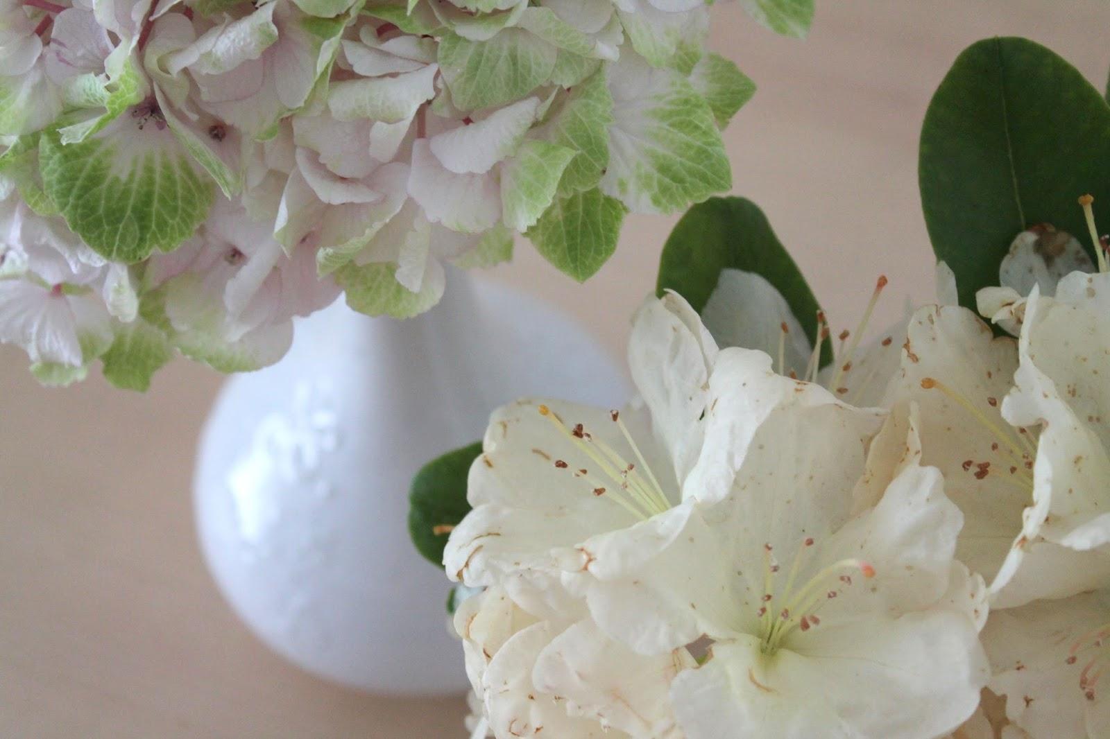 Hortensie und Rhododendron