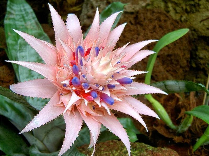 Garden of life plante exotice for Plante bromelia