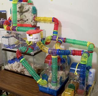Tudo sobre todos os hamsters aprenda tudo sobre eles tour gaiolas legais p - La plus grande cage a hamster du monde ...