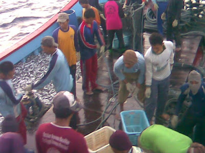 Contoh Laporan Pkl Kapal Ikan Purse Seine Bab I Bagian 2 Ilmu Kelautan Perikanan