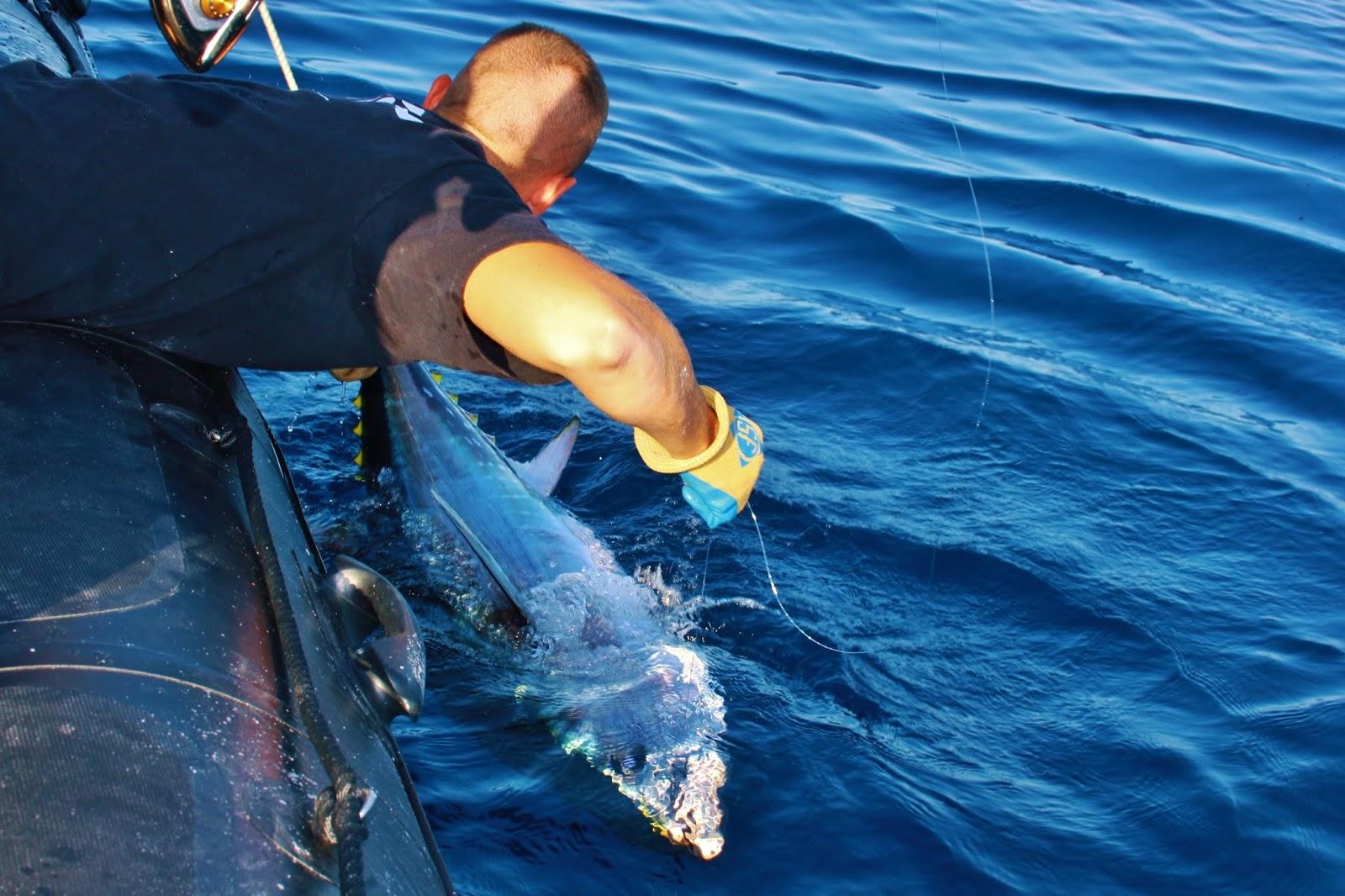 guide de pêche au thon
