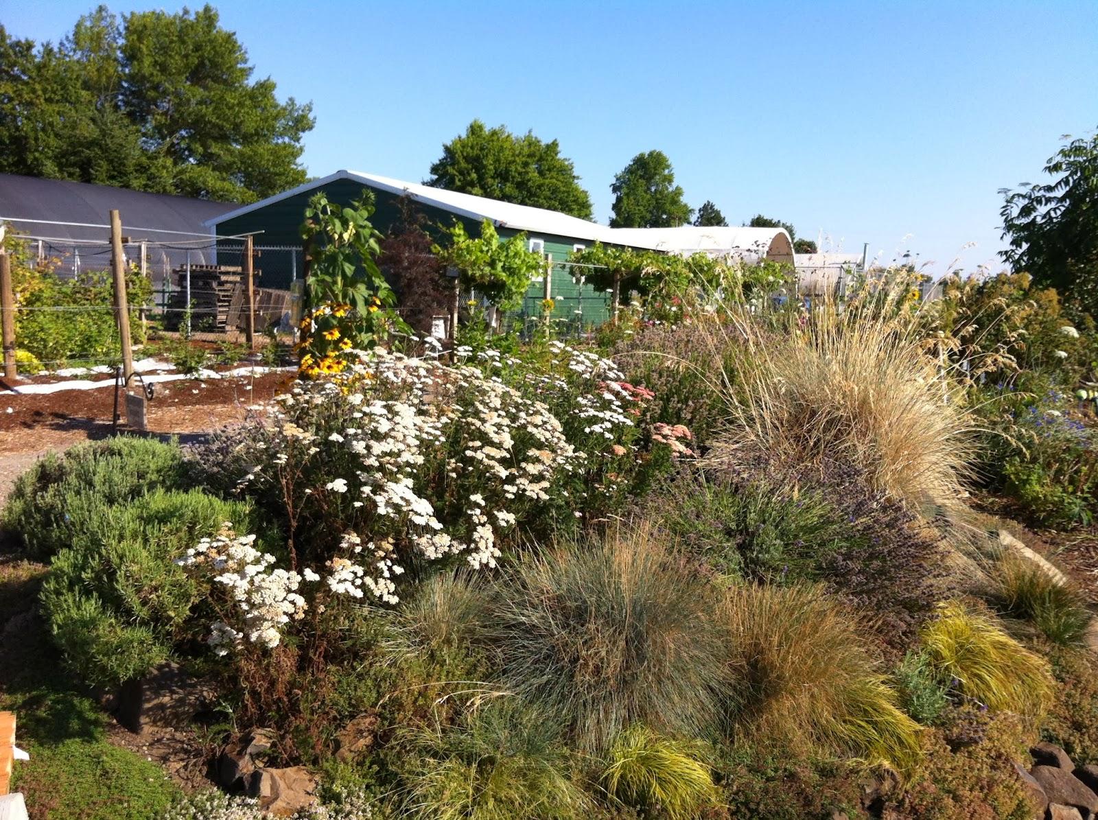 OSU Master Gardener(TM): 2013