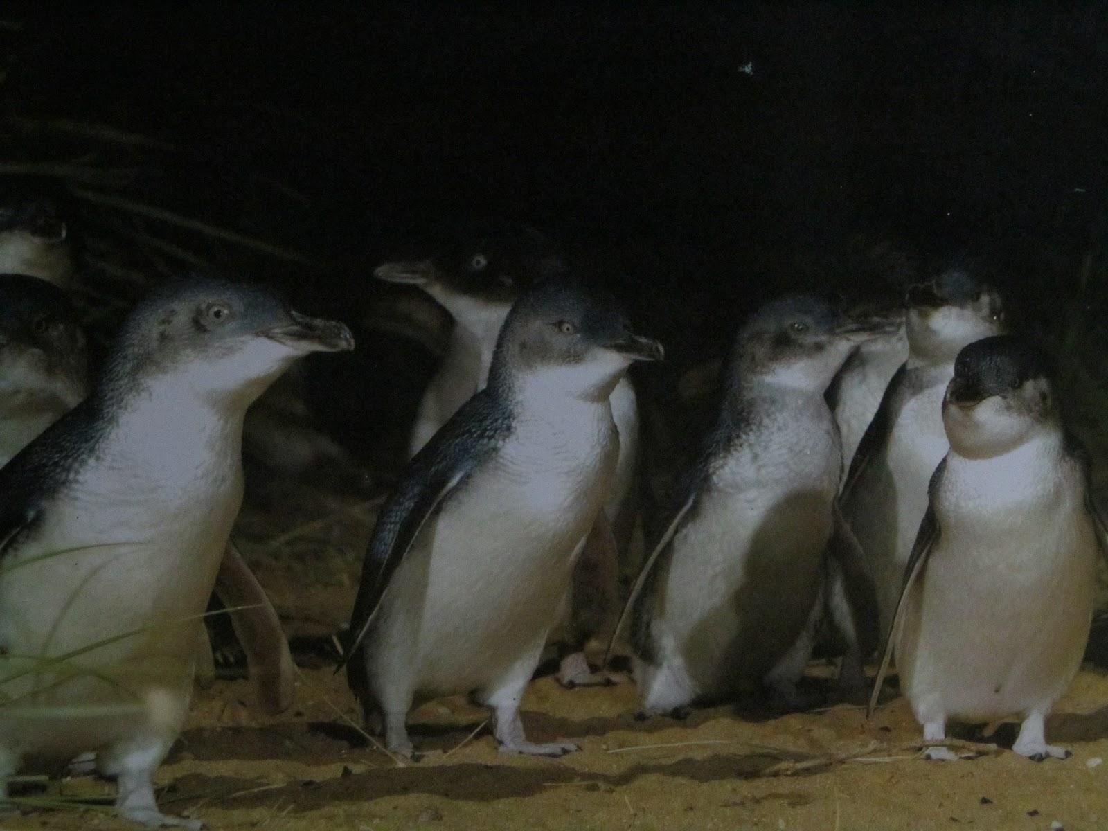 Woolamai Rooms Phillip Island Adventure