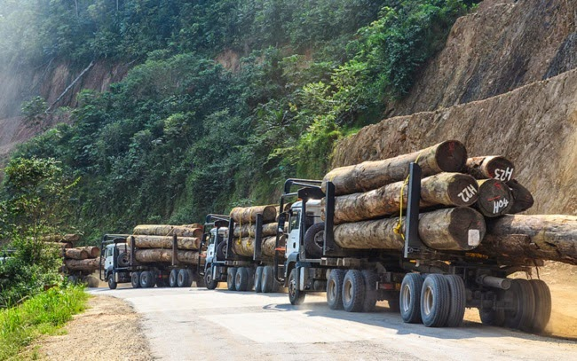 A convoy of trucks carrying logs from tropical forests in Gabon, central Africa. (Credit: jbdodane via Flickr) Click to Enlarge.