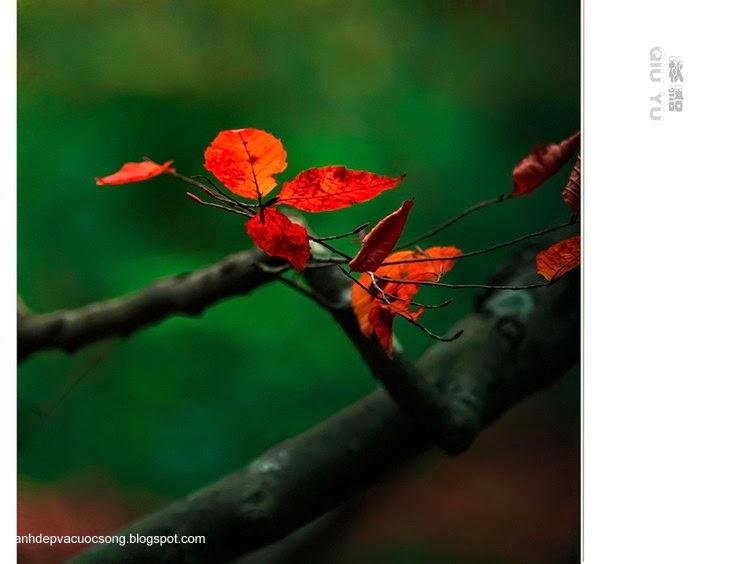Chiếc lá mùa thu 7