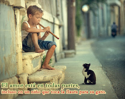 The boy and his cat - El niño y su gato