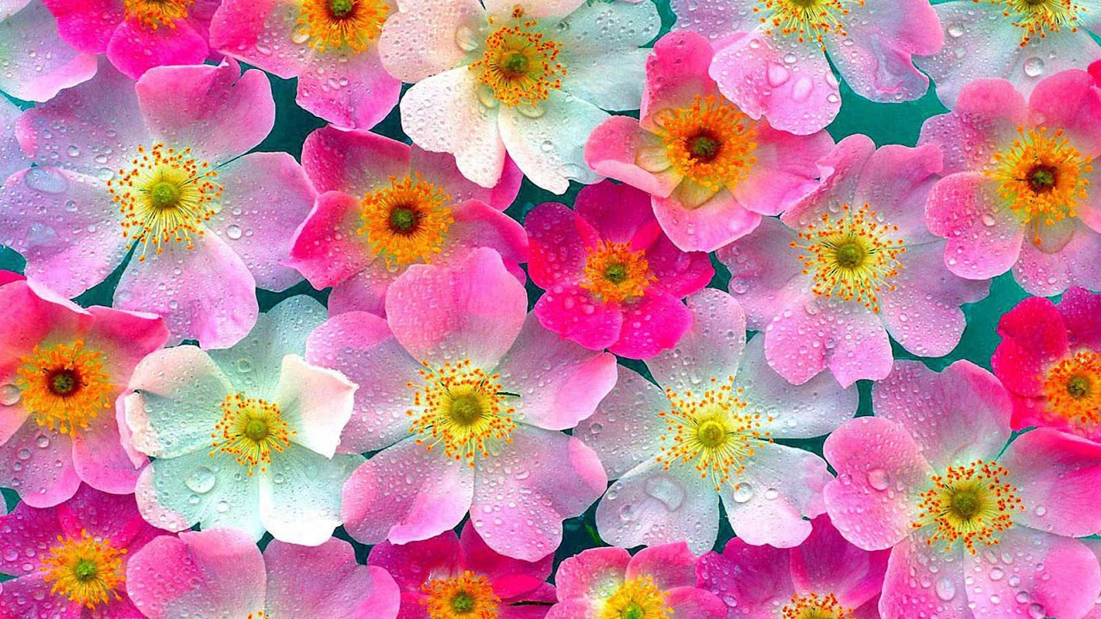High Quality Flowers Wallpapers