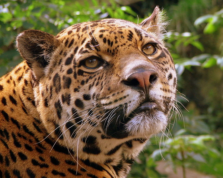 Costa Rica Becomes The FIRST Nation To Ban Hunting!