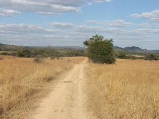 Two-Track-Bush-Road-Bushveld