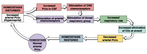 Homeostasis Hemodinamik Keperawatan