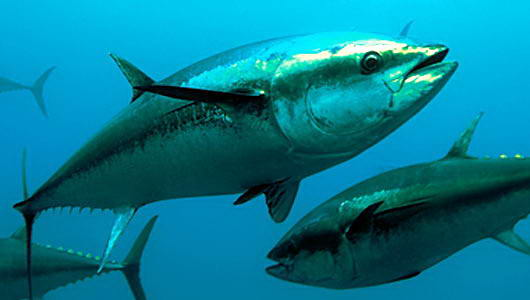 Ikan  Mati  Yang Dihargai 3,5 Milyar