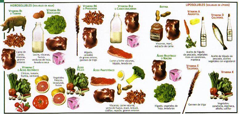 Importancia de macronutrientes y micronutrientes: Vitaminas