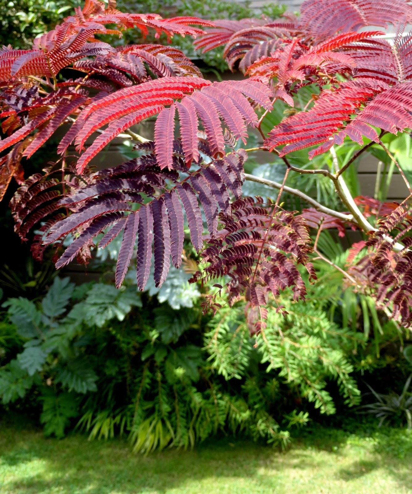 danger garden desperately seeking dark evergreen. Black Bedroom Furniture Sets. Home Design Ideas