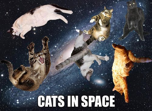 Imagine - Cats In Space