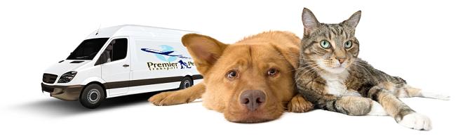 animal transport melbourne