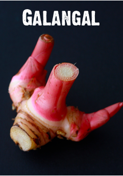 what does galangal herb taste like?