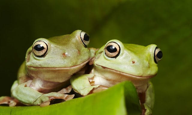 An Inspirational Story of Two Frogs in the Milk